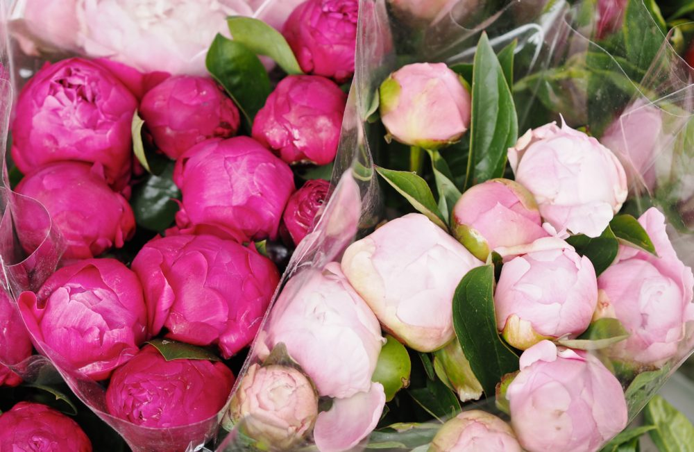 set-of-peony-flowers.