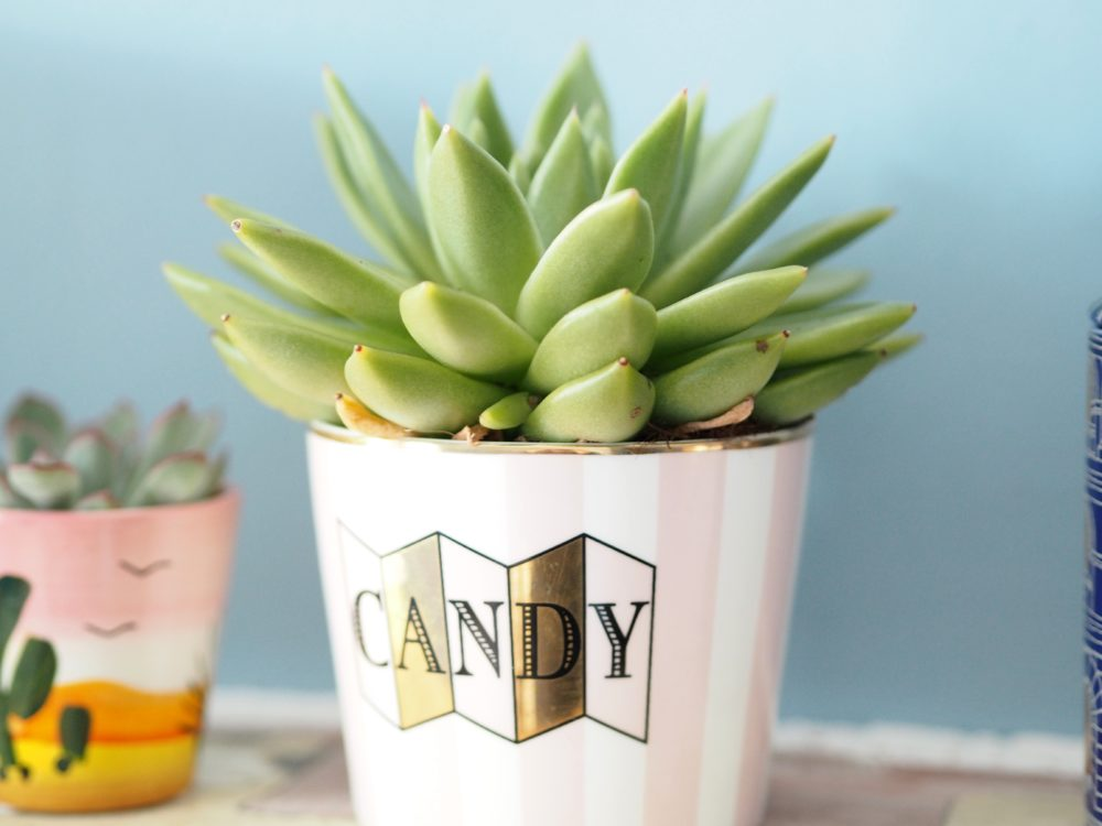 mon-showroom-cactus-