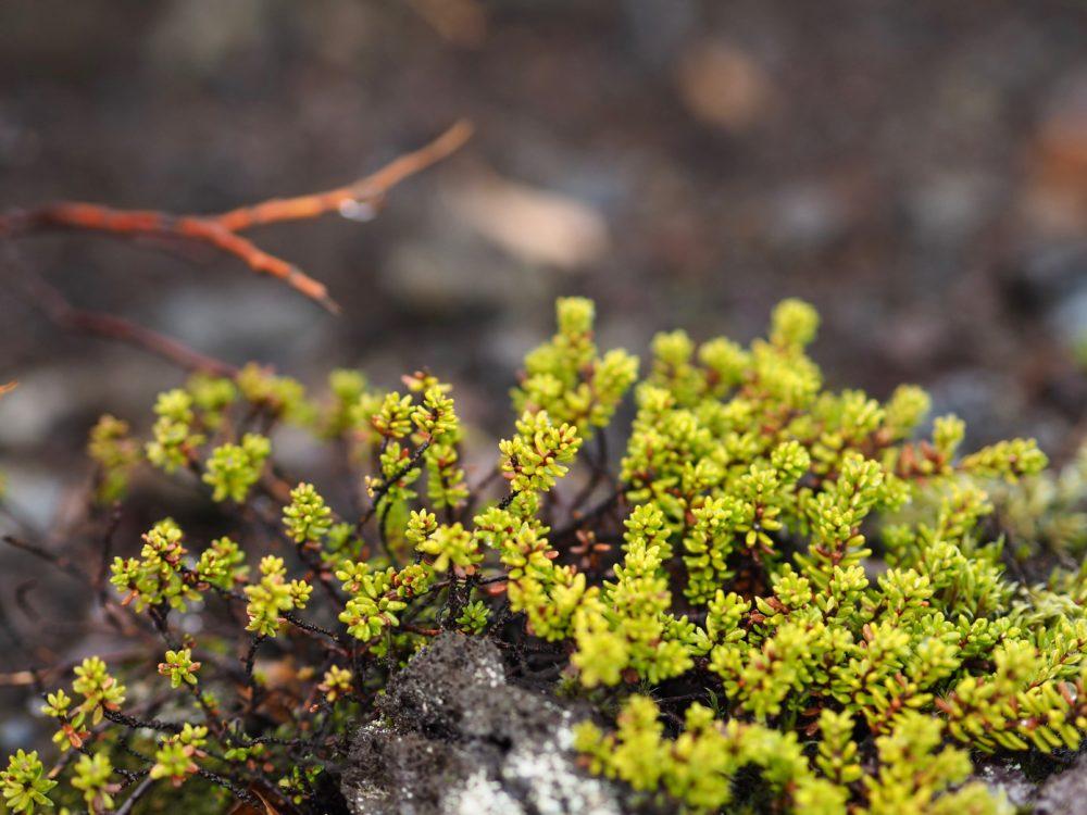iceland-landscape-travel-blogger-volcanic-rock