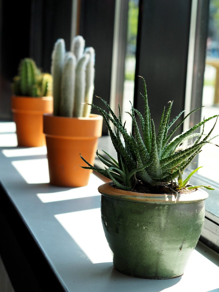 The-Student-Hotel-Amsterdam-cactus