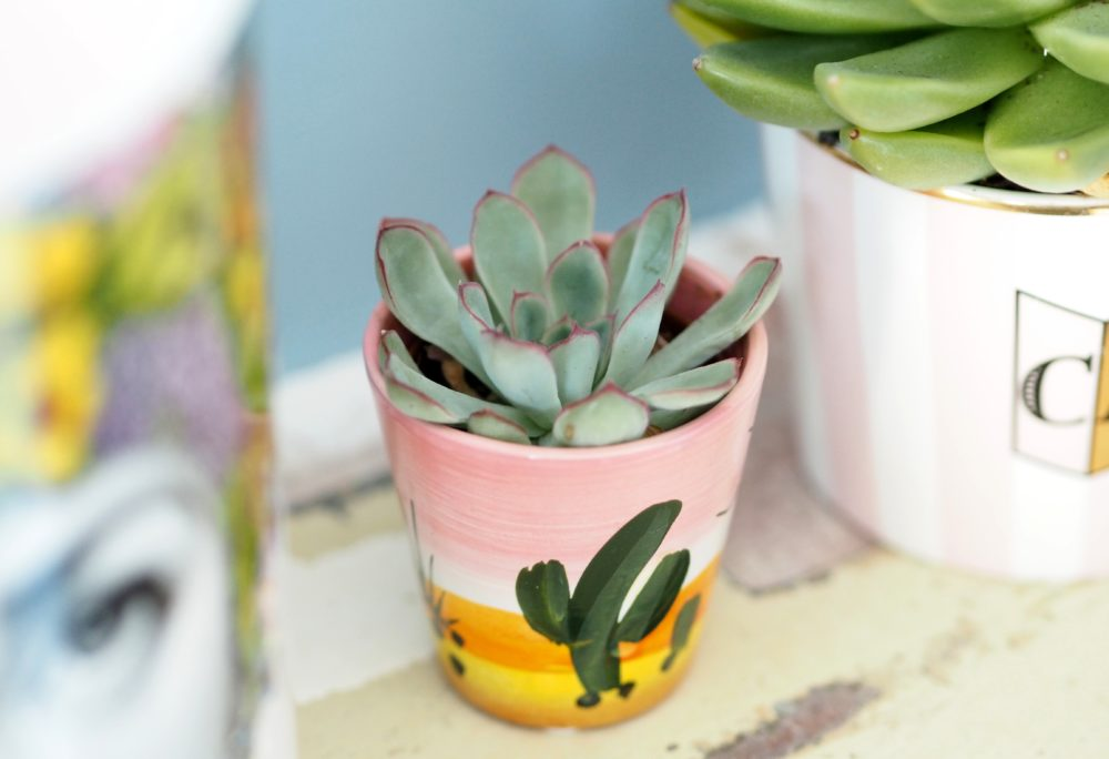 cactus-from-homebase