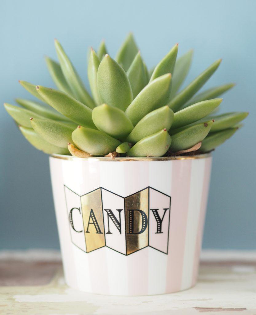 mon-showroom-cactis-pot-