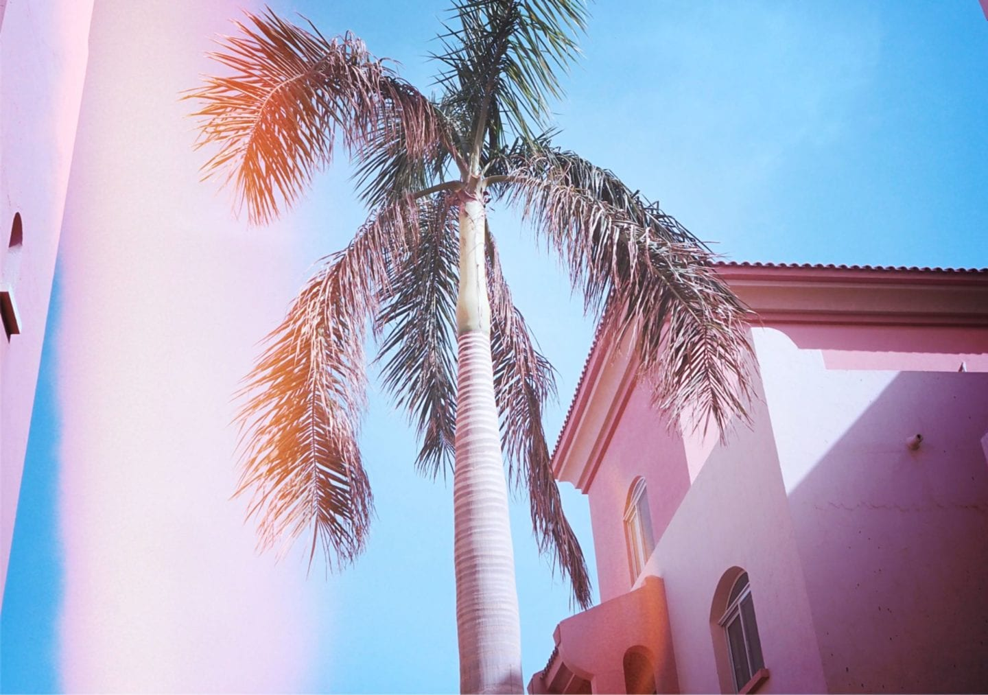 pink-palm-trees-egypt-soma-bay