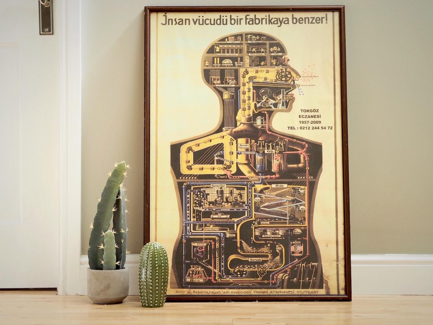 matalan-cactus