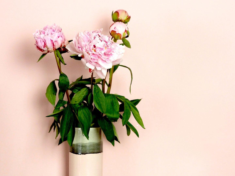 peonies morrisons pink olivery bonas pink and grey vase