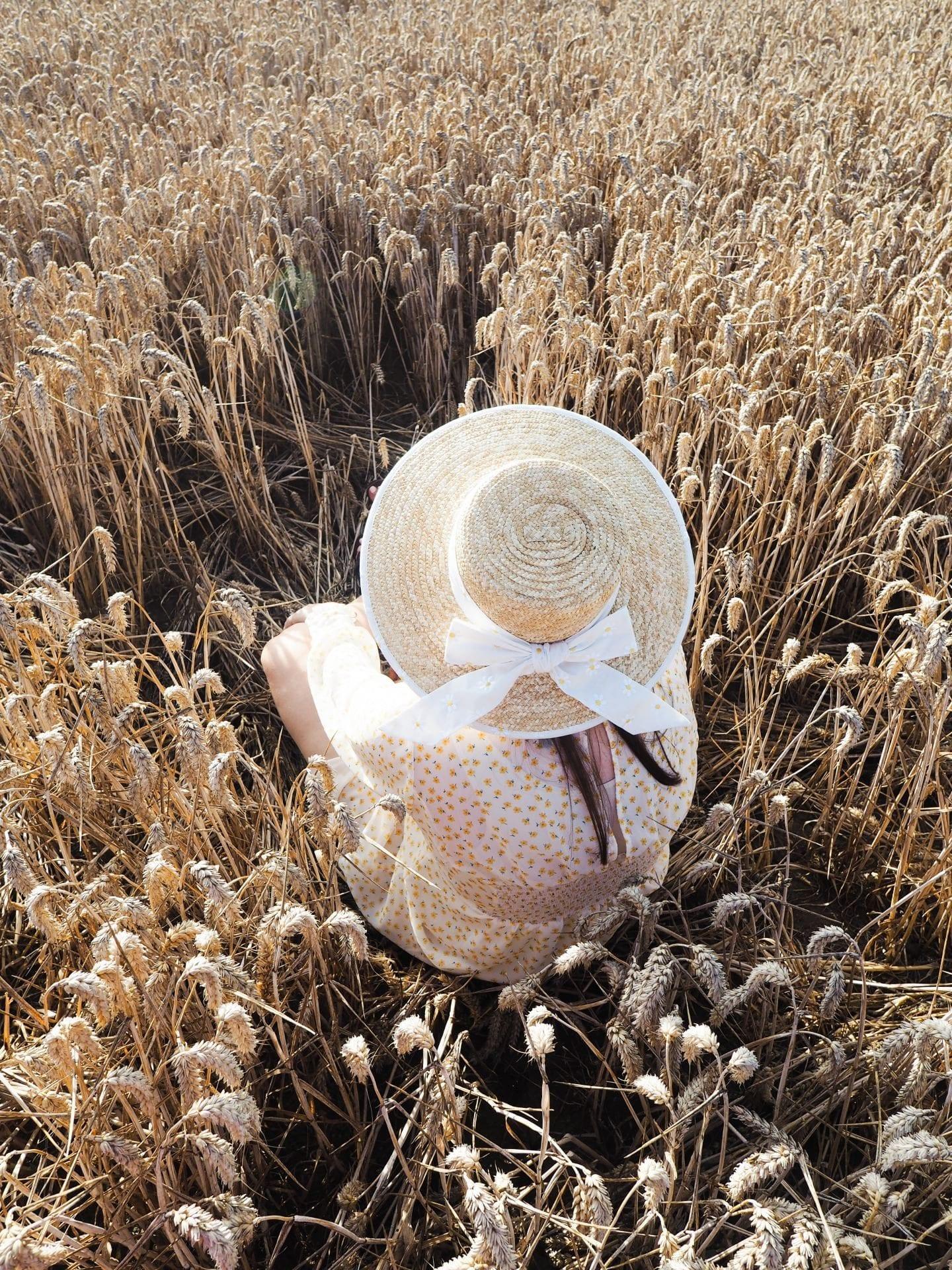girl in corn field a danielle life