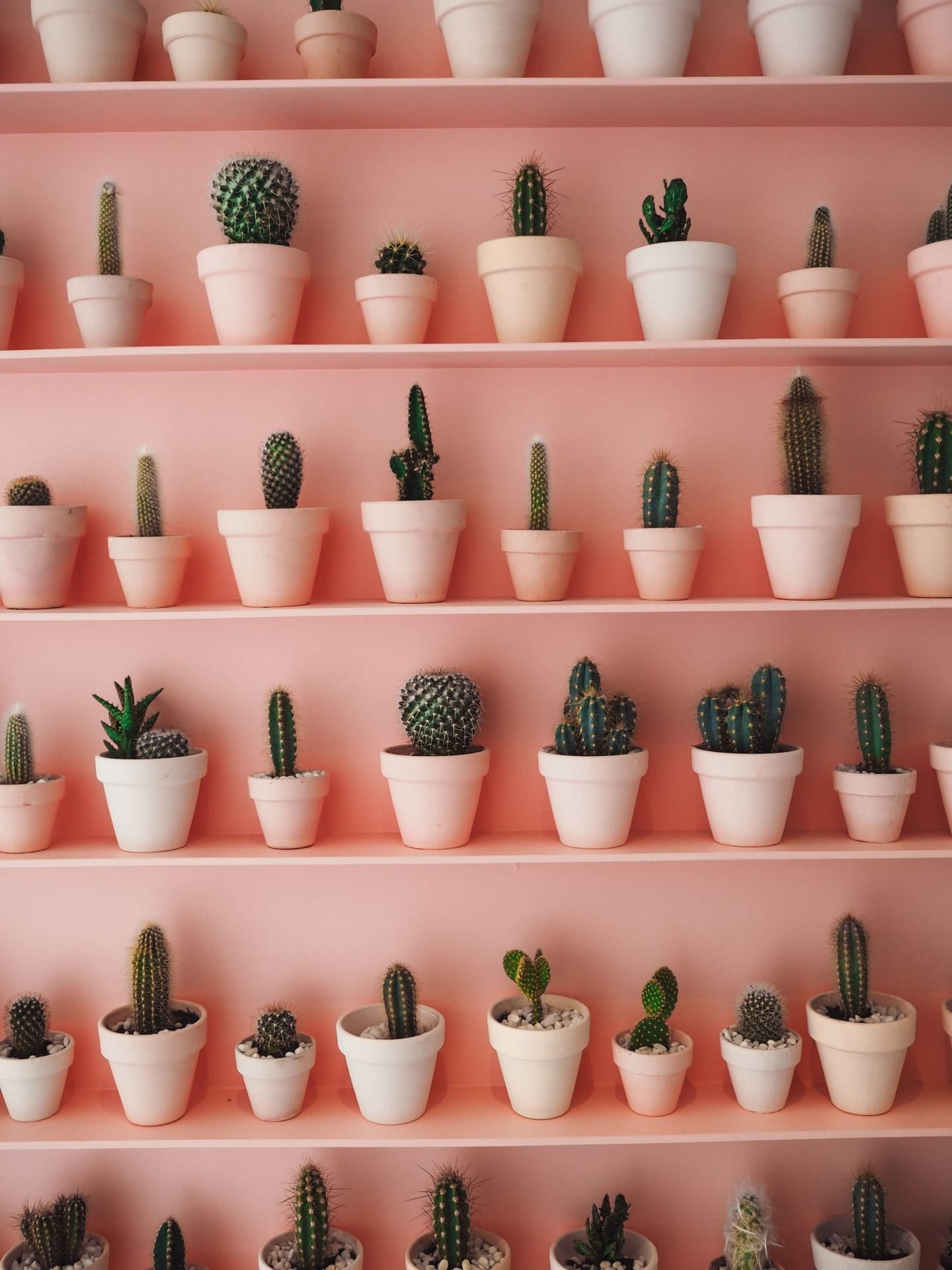 sugaring london cactus wall