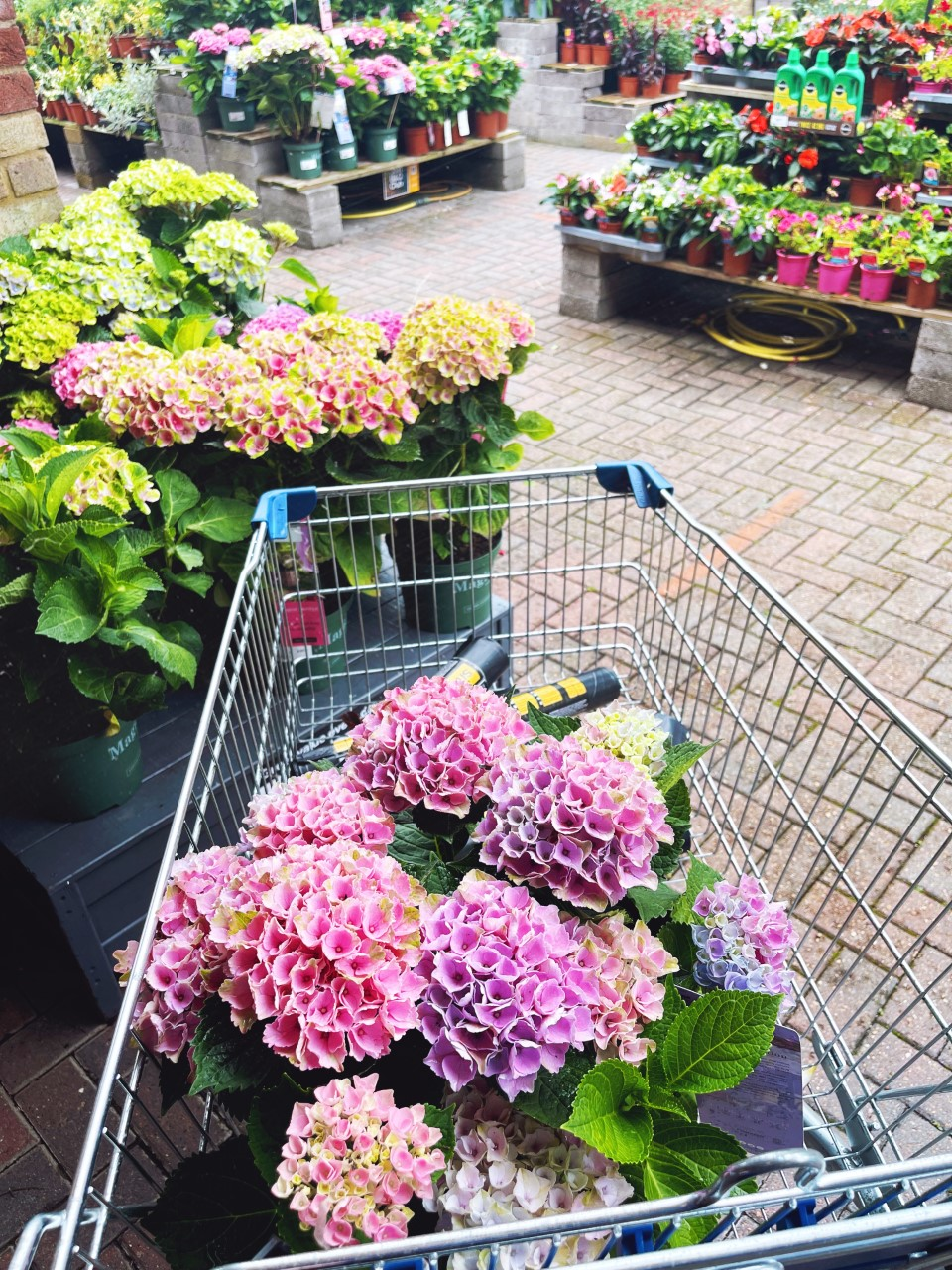 plants from b&q